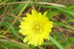 Two Flower Cynthia